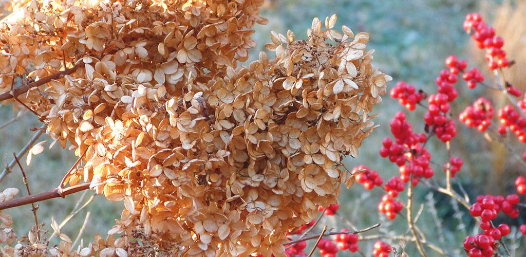 Работы в саду, огороде и в цветнике в декабре