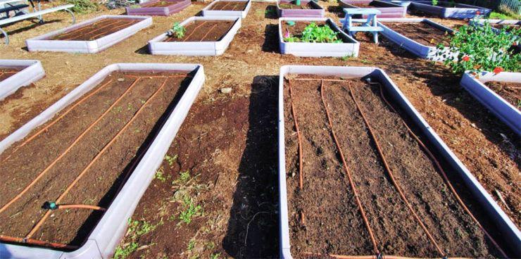 Мульча, капельный полив и оформленные грядки вот и огород без хлопот