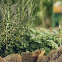 Растения для души