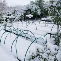 Чем заняться в январе в саду фото