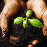 Хорошая почва - богатый урожай