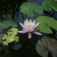 «Мерцающая вода» в саду