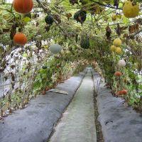 Нескучное вертикальное озеленение сада