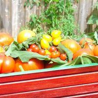 Выбираем новинки для обильного урожая
