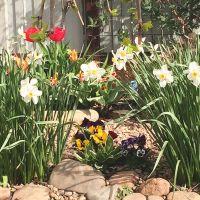 Яркие весенние цветники фото