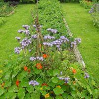 Рай для овощей фото